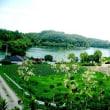 丹生湖 黄金の絨毯   H-29- 7-11