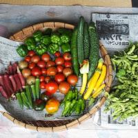 今日の収穫、枝豆を茹でる。