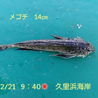 笑転爺の釣行記 2月21日☀ 久里浜海岸