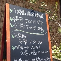 小野園  新茶情報