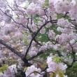 春に 願いしあの夢は今も見えているよ さくら舞い散る~終わってもまた続くんだね~