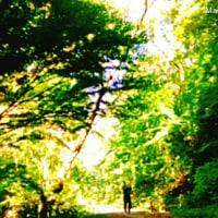 オカリナのある風景🎵「君をのせて」輝く朝の森へ