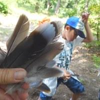 県の森林公園で探鳥ガイド。(5/21*日)