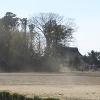 飛散の作土を遮る屋敷林