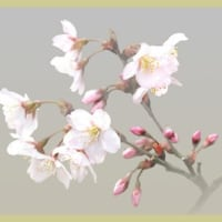 早咲きの桜が咲きだした