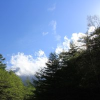 山岳点景:最高峰の森、皐月富士