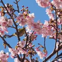葛西臨海公園・早春の花々