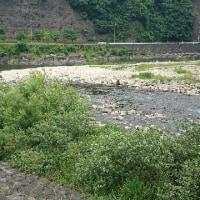 高津川の様子