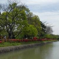 八条池 (3)