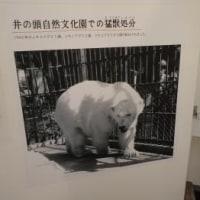 井の頭自然文化園に戦時中 ホッキョクグマがいた