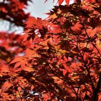 筥崎宮花庭園からp4(D810,28-300mm&マクロ105mm)
