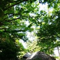 『新緑』 鴫立庵