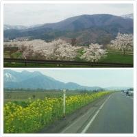 北信州の春は着実にq(^-^q)