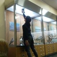 きれいな姿勢 ~美術博物館清掃実習~