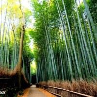 サラサラと竹が奏でる演奏場のような「竹林の道」