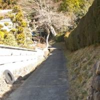 福島県棚倉町、寺山二柱神社の大杉です!!
