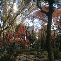 街ナカみどり   東京の晩秋   迎賓館