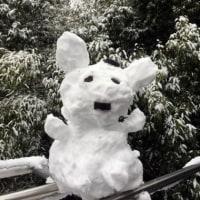 本日は積雪なり