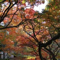 秋色は濃く