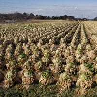 間違っているかもしれない農業スタイル