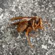 今日も蜂の巣駆除