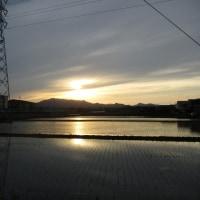 夕陽とコデマリと藤