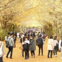 昭和記念公園、落胆と紅葉(昂揚)