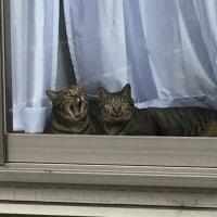 9月16日(金)  猫さんズ  齋藤