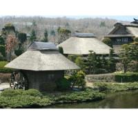さくら旅2017年。忍野八海「榛の木林資料館」富士を背にした茅葺き屋根、絶景です。