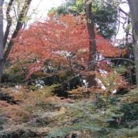 糺の森、紅葉!