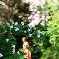 モンタナ咲く小径