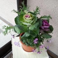 真冬に元気に育つ寄せ植えを見て元気が出た