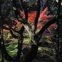 六甲・秋の風景