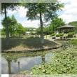 平池公園の美しい景色