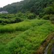 挑戦田舎暮らし 長年の休耕田をコスモス畑へ(その16)大雨にびっくり!