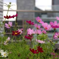大阪ステーションシティの天空の農園