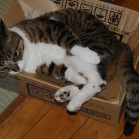 小さな段ボール箱がメメののお気に入りになった