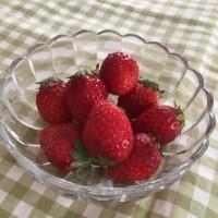 天敵栽培のイチゴとオーガニックコットンの共通点