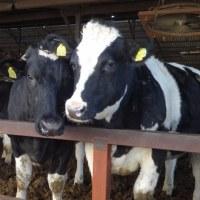 牛ふん堆肥と籾殻と米糠と