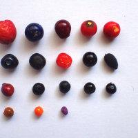 果実を並べる ー バイオフィリアを考える