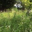 夏草に足を取られる不具となり