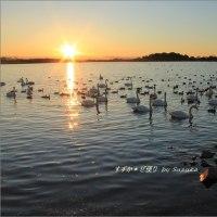 落日と白鳥