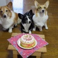 お誕生日ケーキが届きました!!