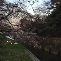 としまえん 桜まつり