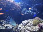 サンシャシン水族館~ダンゴウオがやってきた!