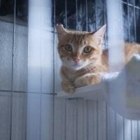 保護猫ライフくんリブちゃんの人馴れに苦戦中〜