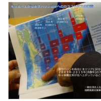 劇的に縮小した北海道隣接サハリン州カラフトマス漁獲勧告