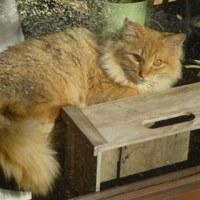 お花屋さんのウィンドウの中の猫ちゃん