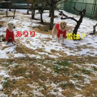 お庭で雪遊び~♪