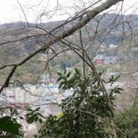 鎌倉を知る ーー 祇園山ハイキングコース ーー